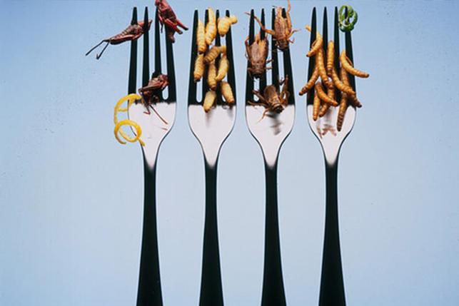 Forchette con insetti infilzati